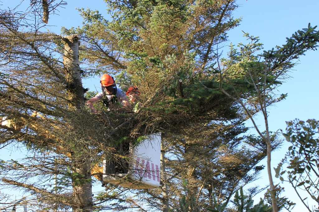 san diego tree removal services