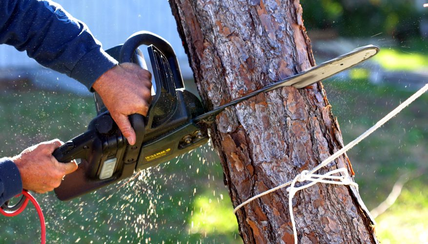 san diego tree services