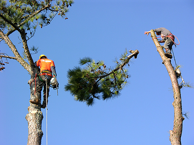 tree services in san diego california