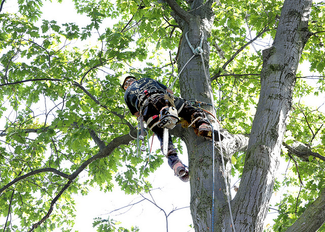 tree trimmers san diego ca
