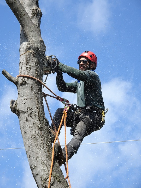 tree trimming service san diego county