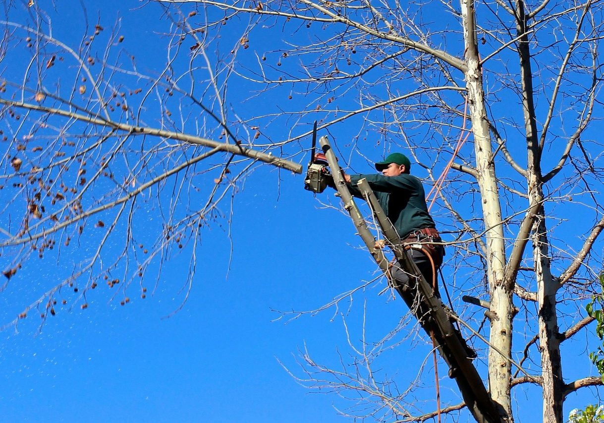 best tree trimming service in San Diego CA