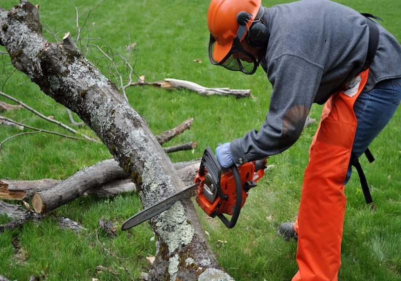 san diego tree removal experts