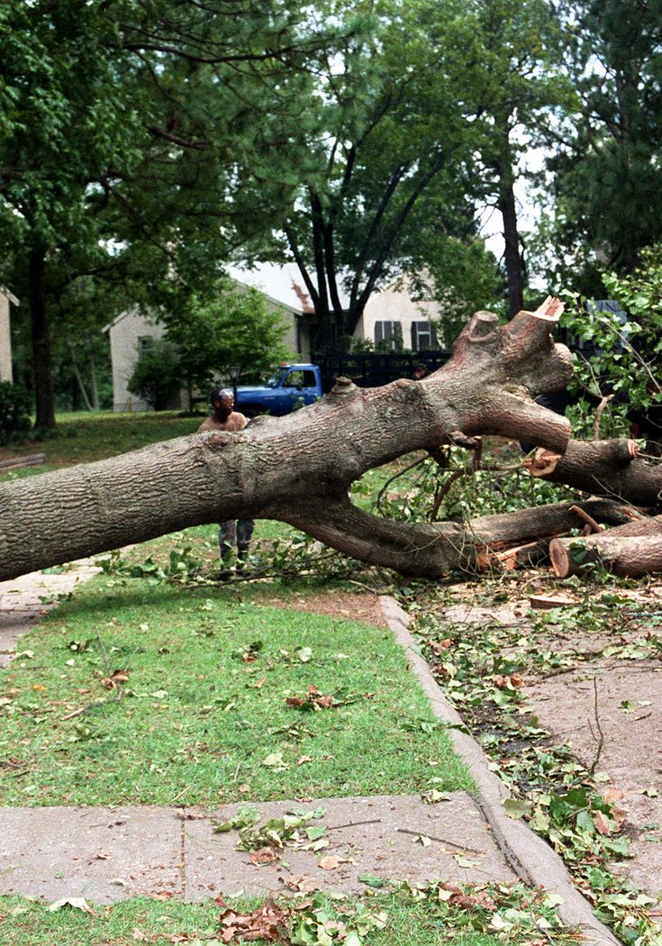 Members of the 23rd Civil Engineer Squadron/23rd Wing chainsaw a tree lying across Ethridge Street in the NCO housing area.  Structural damage on the base from Hurricane Fran was only slightly over $132,000.00, but the natural loss of hundreds of stately oaks, tall pines, and numerous other trees was a loss that could never be counted financially.